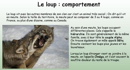 expo_loup
