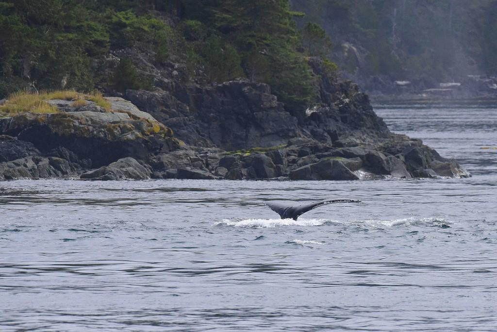 baleine-queue