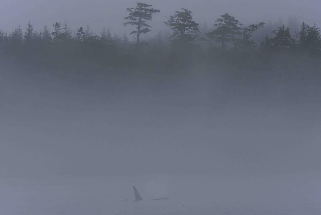 orque-brouillard