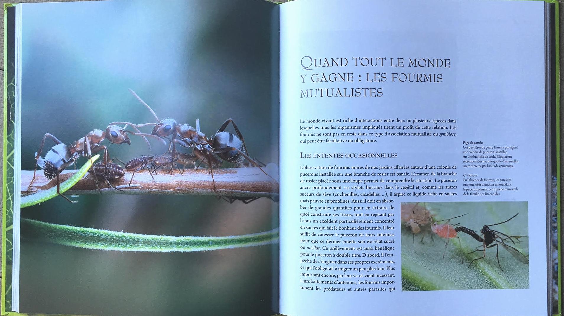 Eloigner Les Fourmis Au Jardin formidables fourmis - faune sauvage