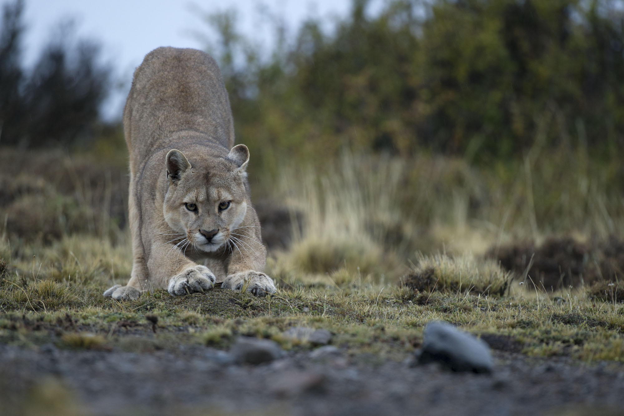 e9de6ac3ef666 Comment les lecteurs peuvent-ils aider à la préservation de l espèce